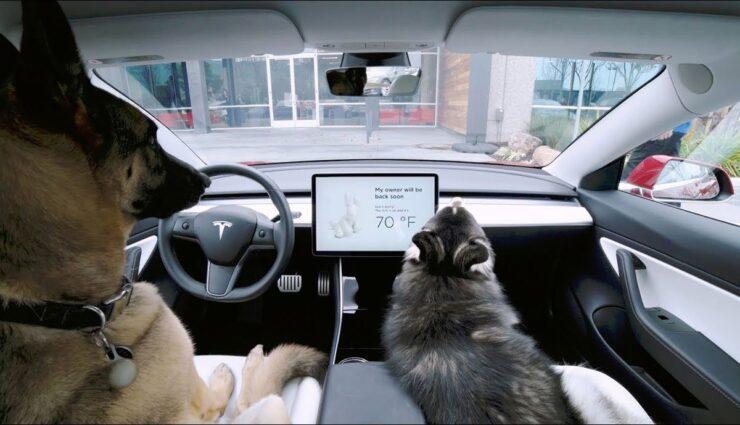 Tesla-Dog-Mode